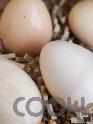 Το αυγό προφυλάσσει τα μάτια