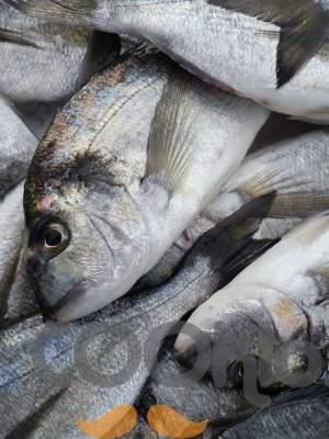 Γιατί να τρώμε ψάρια;