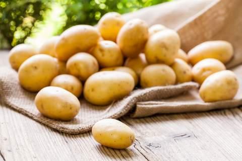 Η πρώτη γνωριμία της Ευρώπης με την πατάτα έγινε τον 16ο αιώνα