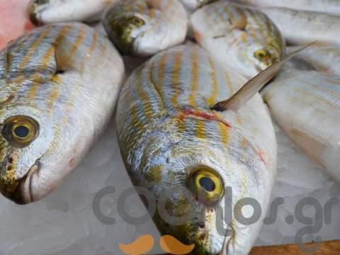 10 βήματα για να ψήσεις το ψάρι στα... κάρβουνα