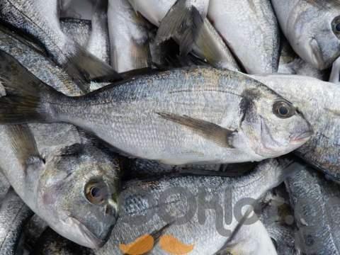 Μάθετε για τις θρεπτικές ιδιότητες των ψαριών