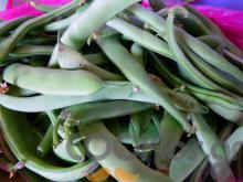 Τα πράσινα φασολάκια και οι ευεργετικές τους ιδιότητες
